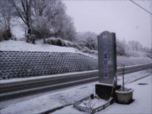 朝から雪です